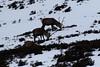 wentwest (walter.innes) Tags: walterinnes glenshee snowcappedmountains mountainhares reddeer snowbuntings