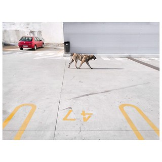 Paisaje urbano con perro. Mola el título ¿eh?