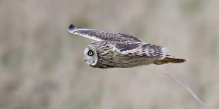 Gliding by -SEO