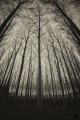 flees (ipellisa) Tags: fuig huye flees corre bosc bosque forest arbres arboles trees hivern invierno winter foscor oscuridad darkness nikon d500 sigma 1770mm