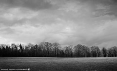 A changeable day in early March. (andreasheinrich) Tags: landscape forest field trees afternoon spring march blackandwhite blackandwhitephotos moody overcast windy germany badenwürttemberg neckarsulm dahenfeld deutschland landschaft wald feld bäume nachmittag frühling märz schwarzweis trüb bewölkt windig nikond7000
