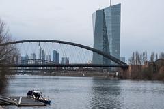 2018-Ruderer legen an (mercatormovens) Tags: frankfurt city deutschland main grosstadt ezb ruderer oberrad fluss hochhäuser deutschherrnbrücke osthafenbrücke