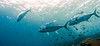 Komodo National Park, Indonesia (Dumbledore Calrissian) Tags: reeffish reef manta rays mantaray flores indonesia floresstrait corals coralreef