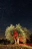 Noche de Miedo./ Fright Night. (Recesvintus) Tags: yeste albacete spain españa sierradelsegura jartos olivo olivar lightpainting redlight luzroja iluminación nightphotography nocturna nocturne sky stars starry cielo estrellas estrellado cuentodeterror horrorstory tree árbol olivetree wbpa recesvintus horror terror vampire movietitles títulosdecine
