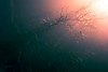 cellar dweller (Clickumentary) Tags: branches tree moody light gradient murky misty
