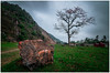 Alone Tree (=Heo Ngốc=) Tags: alone tree moutains bombax flowers gạo hoa mộcmiên stone clouds dark nobody season natural landscape vietnam d300 tokina1116