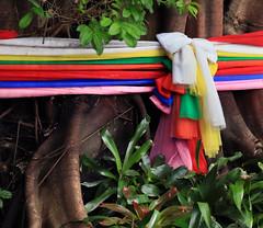 Sacral thai trees (Robyn Hooz) Tags: thai thailandia fascia sacro holy tree colors color roots radici traditions tradizioni spirits spiriti