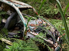 Abandoned Car (cowyeow) Tags: okinawa japan asia asian japanese travel mystery strange abandoned car vehicle rust rusted rusty old thrashed forgotten green overgrown forest