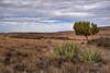 High Plains of Arizona (Kyle French) Tags: landscape arizona az cloudy tree desert plains canon 2470