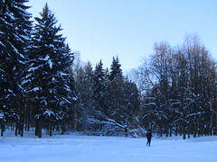a winter walk (VERUSHKA4) Tags: park kuskovo canon europe russia moscow hiver winter outdoor vue way path view nature people woman firtree bough branch trunk verdure neve neige white blanc february frost