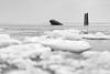 HAMBURG UWE //I (Maike B) Tags: hamburg uwe wrack eisschollen elbe monochrome falkensteinerufer blankenese shipwreck icefloes