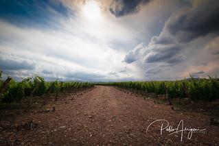Sky, land and vineyard