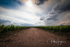 Sky, land and vineyard (Pablo Arrigoni) Tags: mendoza argentina argentine vino wine vineyard green blue azul verde campo country outside outdoor southamerica americadelsur sigma 1020 eos eos70d 70d canon bodega cellar sky cielo nube cloud color colors colores