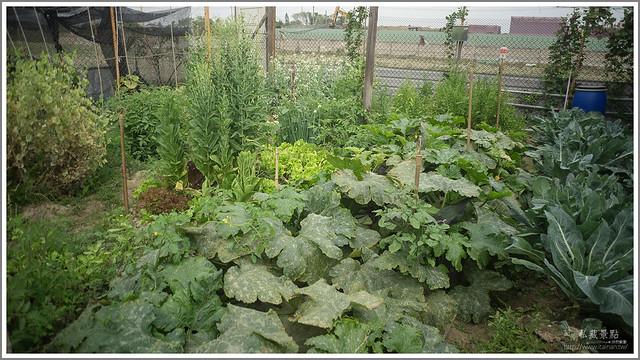 善化草莓 來去晴空農場找無農藥栽種的草莓 (15)