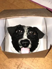 dog cupcake (backhomebakerytx) Tags: cake dog boarder collie cupcake kid birthday backhomebakery puppy face sculpting