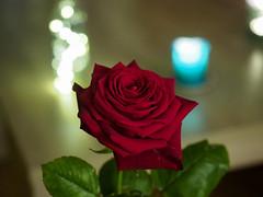 Love & Passion (nicolasgirodon) Tags: love passion romance flower rose
