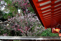 Roof and Plum (tez-guitar) Tags: roof architect shrine plum plumblossom pink white tree kamakura japan leicax1