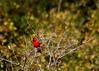 Backyard Birds (austexican718) Tags: texas native fauna centraltexas hillcountry wildlife nature bird backyard bokeh