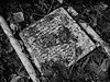 (GLKPhotos) Tags: ladders steps metal rust worn unused scrap old paint splatter mess details textures tones tonalcontrast contrast leaves leaf branches twigs dirt grass mud blackandwhite monochrome bw mono panasonic lumix gx8 uncropped rotting redundant