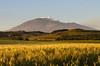 Saudade (ciccioetneo) Tags: etna sunset countryside wheat sicily siciliancountryside ciccioetneo tramonto