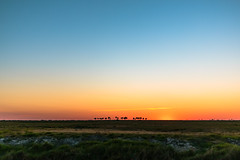 Somewhere near Lorida Sunset (jaosehl (Ashleigh)) Tags: lorida florida centralflorida myflorida nature color field farmlands palmtrees outside playoutside exploremore playoutdoors sunset skies bigskies openfields itsbeautifuloutthere ididntwanttoleave ilovethecountry mosquitos