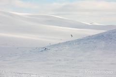Kiters giant playground, Norefjell, Norway (KronaPhoto) Tags: 2018 natur vinter kite sport ski skier giant playground lekeplass vidde mountain landscape landskap fjell winter vår snow snowscape people game lek nature view utsikt friluftsliv dream followyourdream
