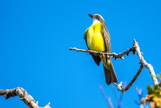 Birds of Mayan Riviera