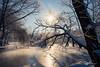 Snow covered trees (grahamvphoto) Tags: snow landscape kent england uk trees lake winter cold frozen sun sunrise