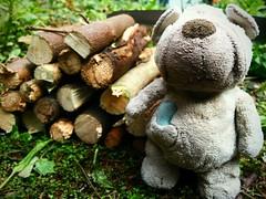 21.03.18: busy in the garden (Wang Wang 22) Tags: cute pug mops nici plüsch sweet hund dog wangwang garden spring wood green