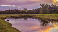 Sunset Creek. (williams.darrell53) Tags: landscape sunset creek stream water cloud sky tree swan bird canon reflection australia