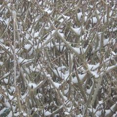 The last snow of this winter? (Landanna) Tags: snow sneeuw sne nature natur natuur winter winterwonderland vinter
