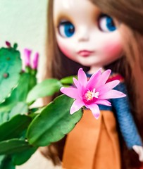 Have a wonderful woman's day!  I got this cactus from my hubby. He also gave me chocolate, but I ate it already. 🍫😄💗🌵🌺 #womansday #blythe #blythemusicaltrench