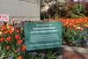 P3080128 (Vagamundos / Carlos Olmo) Tags: dallas usa eeuu vagamundos vagamundos2018 texas tejas flower flores jardín garden arboretum botanical botanicalgarden jardínbotánico