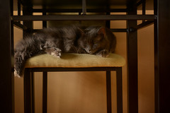 Adjust Your Nap Schedule (flashfix) Tags: march102018 2018inphotos ottawa ontario canada nikond7100 40mm nikon flashfix flashfixphotography portrait naturallighting cat feline whiskers ears kittynose fyero nebelung ragamuffin ragdoll fluffy graycat chairs napping table lines