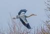 Birds (100 of 1).jpg (andy_click) Tags: ardea cinerea greyheron