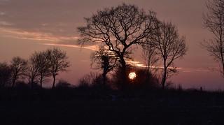 Die Sonne geht auf in Bergenhusen, Stapelholm (3)