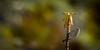 """El desayuno servido (Tenisca """"Alexis Martín"""") Tags: lapalma isladelapalma laislabonita islasanmigueldelapalma islabonita naturaleza natura ecología paisaje fotosdelapalma encantorural rural natural flora fauna flores árboles canarias islascanarias laislaverde islacorazón elcampo elmonte luces macaronesia alexismartín alexismartínfotos alexismartin alexismartinfotos amf monteyrural vergel paraíso paradise lapalmaisland quéverenlapalma verlapalma visitarlapalma volaralapalma arecida tijarafe elcasino lapunta lacosta aguatavar tinizara elporis elprois elpueblo monteymar décimas puntocubano turismorural mar tradición tradiciones eldiablo bokeh desenfoque fotografía imagen foto color colour colores colours art fineart"""