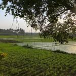 India-Another wonderful view of sunset at Karnataka rice fields thumbnail