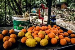 Harvest (Melissa Maples) Tags: adrasan turkey türkiye asia 土耳其 apple iphone iphone6 cameraphone spring table press citrus lemons fruit food oranges