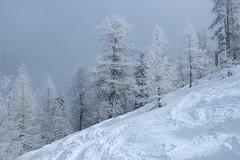 Champex-Lac (bulbocode909) Tags: valais suisse champexlac montagnes nature hiver neige arbres mélèzes brouillard brume