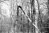 Snow in the forest (25/8) Tags: minolta x700 rokkor 5014 ilford fp4 ilfotecddx