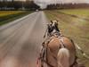 Marshmallow Meets Motor Car (TuthFaree) Tags: smilesaturday beautyofthebeast horse buggy haflinger road rural ga swga georgia horseriding pleasure hobby 7dwf