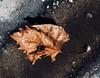 Gritty and Leaf (Robert Cowlishaw (Mertonian)) Tags: dowmlooking lunchwalk concretecanvas canonpowershotg1xmarkiii gutter curvy markiii g1x powershot canon robertcowlishaw cement concrete layers leaf gritty mertonian