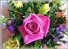 Mothers Day Flowers .. (** Janets Photos **) Tags: uk flowers flora roses motheringsunday mothersday
