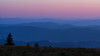 Roan Mountain Tree Tops (Travis Rhoads) Tags: 2017 metaboneseftoeivt sonyilce7rm2a7rii canonef135mmf2lusm reallyrightstuff ba72l bh55 rrspcl01 tvc33 landscapephotography mountains nikcollectionbygoogle sunrise dawn thebluehour copyright2017 travisrhoadsphotography northcarolina roanmountain appalachiantrail expeditionroan2017 roanmountainstatepark roundbald