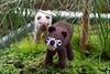 Jacky & Nuka (petrOlly) Tags: crochet handmade amigurumi object objects planetjune