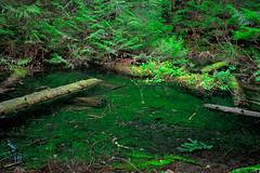 Green Pool (jschust86) Tags: pool water standing green moss log timber