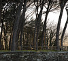 Branches, Sunset and Trees (filippogatteschi) Tags: tree sunset branch composition sunlight daylight colorimage colorful canoneos70d tamron2470 arezzo italy tuscany couple 70mm panorama stonewall clearsky depth shadows contrast vividcolor geometry fineart nature warmth spring march 2018
