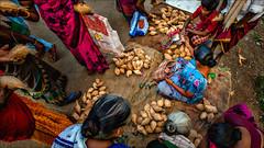 Going coco • Kulamangalam market (Henk oochappan) Tags: ui1a2995 india tamilnadu madurai kulamangalam coconuts oochappan market