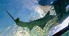 DSC_7822 (martindragon13) Tags: nswaustrailia sydney sydneyaquarium